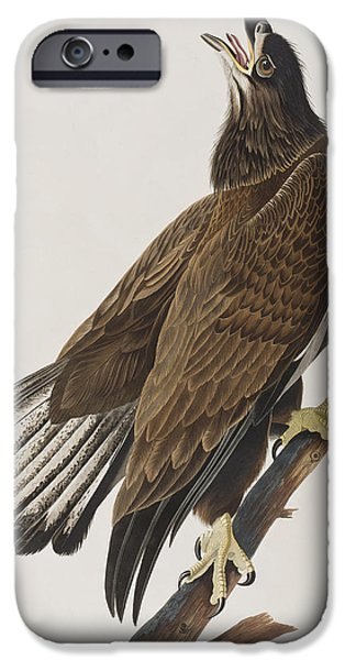 Eagle Paintings iPhone Cases - White-headed Eagle iPhone Case by John James Audubon