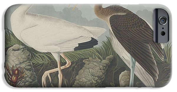 Audubon iPhone Cases - White Ibis iPhone Case by John James Audubon