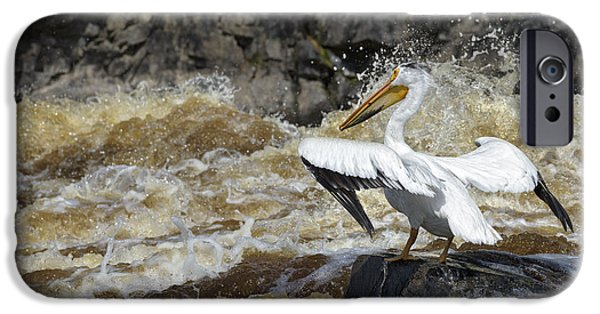 Animals Photographs iPhone Cases - White Pelican Fishing the Rapids iPhone Case by Kim Davidson