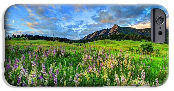 Fort Collins Photographs iPhone Cases - Wildflower Wonder iPhone Case by Scott Mahon