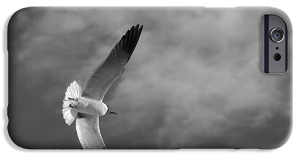 Seagull iPhone Cases - Wings iPhone Case by Don Spenner
