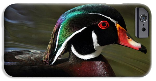Beaver Lake iPhone Cases - Wood Duck at Beaver lake Stanley park Vancouver Canada iPhone Case by Pierre Leclerc Photography