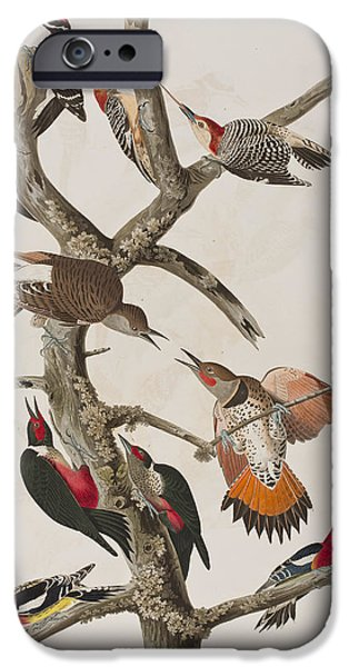 Hairy Woodpecker iPhone Cases - Woodpeckers iPhone Case by John James Audubon