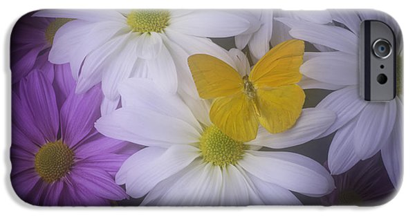 Insects Photographs iPhone Cases - Yellow Butterfly resting iPhone Case by Garry Gay