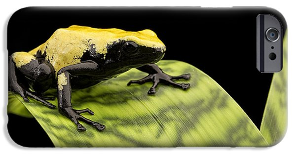 Frogs Photographs iPhone Cases - yellow poison dart frog Brazil Rain forest iPhone Case by Dirk Ercken