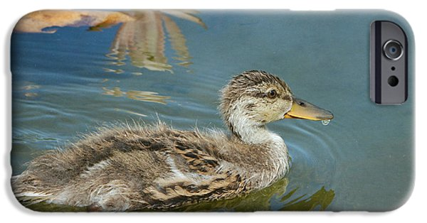 Birds iPhone Cases - Young And Bold iPhone Case by Fraida Gutovich