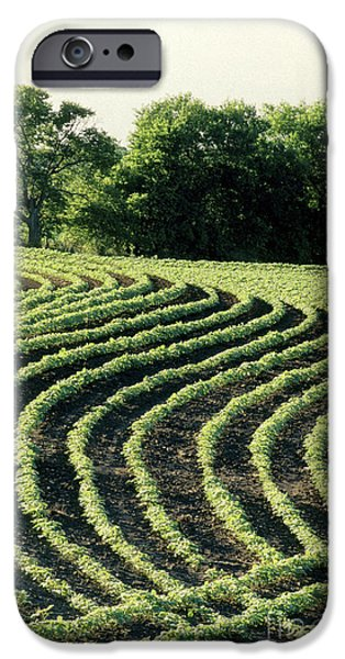 Contour Plowing iPhone Cases - Young Soybean Plants iPhone Case by Inga Spence