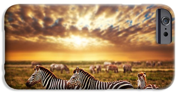 Recently Sold -  - Animals Photographs iPhone Cases - Zebras herd on African savanna at sunset. iPhone Case by Michal Bednarek