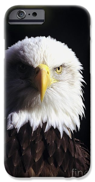 Tongass iPhone Cases - Bald Eagle iPhone Case by John Hyde - Printscapes