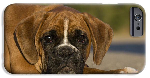 Chin Up Photographs iPhone Cases - Boxer Puppy iPhone Case by Jean-Louis Klein & Marie-Luce Hubert