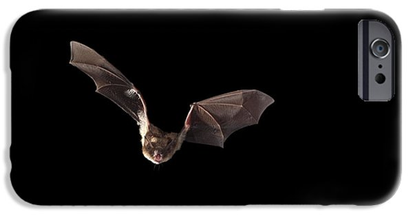 Fauna iPhone Cases - Little Brown Bat iPhone Case by Ted Kinsman