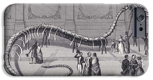 Serpent iPhone Cases - 114 Feet Long Skeleton Of Fake Sea iPhone Case by Ken Welsh