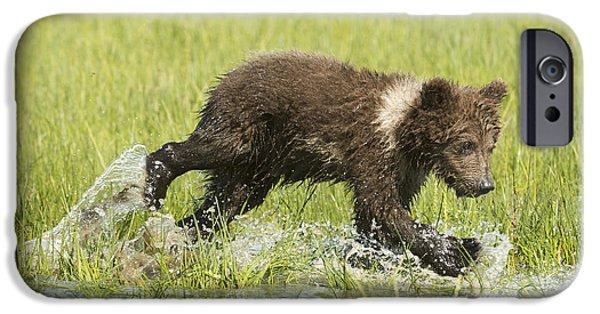 World No. 1 iPhone Cases - Grizzly Bear  Ursus Arctos Horribilis iPhone Case by Daisy Gilardini