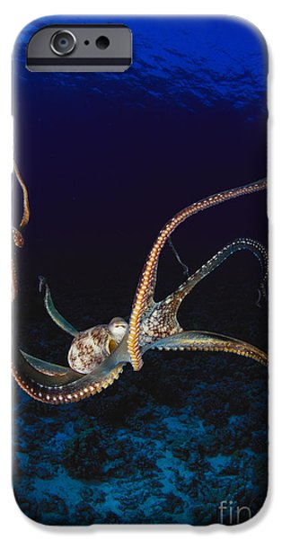Jet-propelled iPhone Cases - Hawaii, Day Octopus iPhone Case by Dave Fleetham - Printscapes