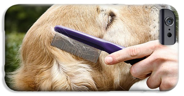 Pet Care iPhone Cases - Dog Grooming iPhone Case by Photo Researchers Inc