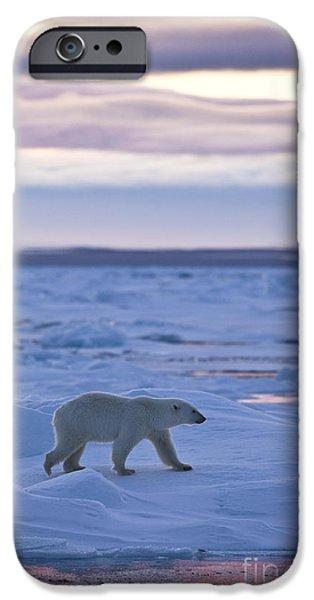 Norwegian Sunset iPhone Cases - Polar Bear In Svalbard iPhone Case by Jean-Louis Klein & Marie-Luce Hubert