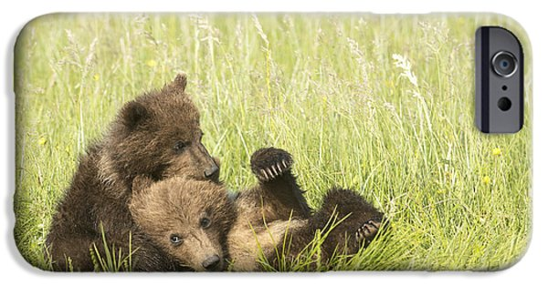 Bonding iPhone Cases - Grizzly Bear  Ursus Arctos Horribilis iPhone Case by Daisy Gilardini