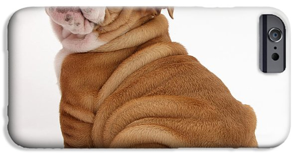 House Pet iPhone Cases - Bulldog Pup iPhone Case by Mark Taylor