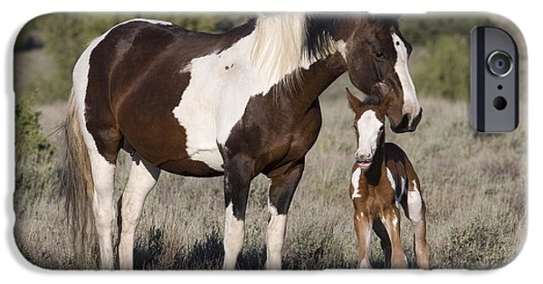Overo iPhone Cases - Mustang Mare And Foal iPhone Case by Jean-Louis Klein & Marie-Luce Hubert