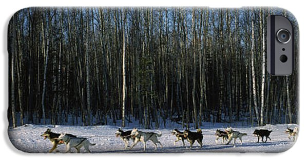 Huskies iPhone Cases - 18 Huskies Begin The Long Haul Of 1049 iPhone Case by Panoramic Images