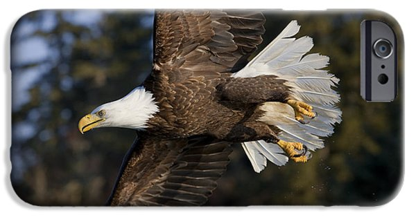 Instinct iPhone Cases - Bald Eagle iPhone Case by John Hyde - Printscapes