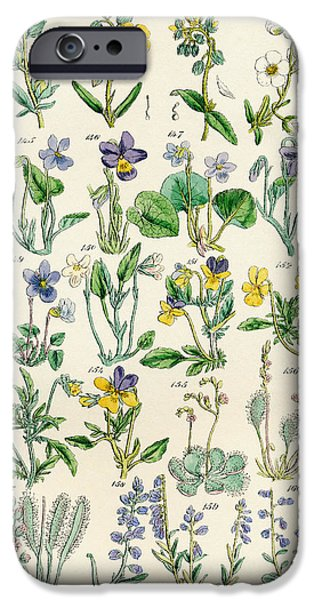 Flora Drawings iPhone Cases - Page Of Colour Illustrations From iPhone Case by Ken Welsh