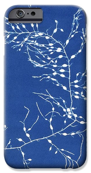 1850s iPhone Cases - 19th-century Alga Cyanotype iPhone Case by Spencer Collectionnew York Public Library