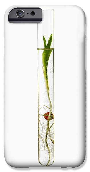 Cut-outs iPhone Cases - A Corn Seedling In A Test Tube On White iPhone Case by Scott Sinklier