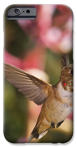 Allen's Hummingbird iPhone Case by Mike Herdering