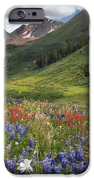 Alpine Flowers In Rustler's Gulch, Usa iPhone Case by Bob Gibbons