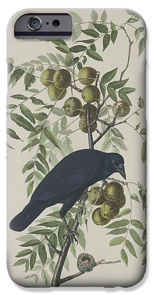 Crows Drawings iPhone Cases - American Crow iPhone Case by John James Audubon
