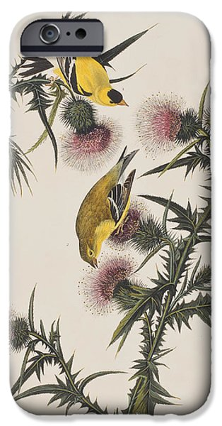 Botanical Drawings iPhone Cases - American Goldfinch iPhone Case by John James Audubon