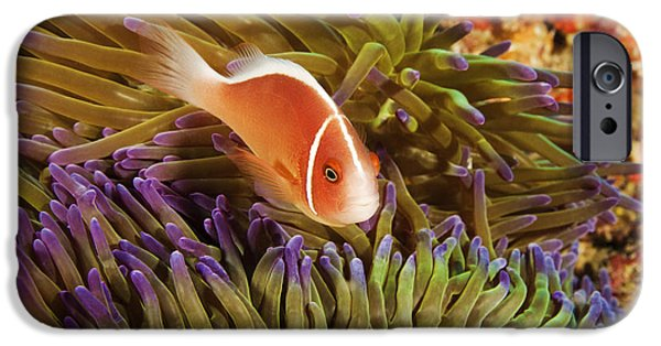 Tendrils iPhone Cases - Anemonefish iPhone Case by Dave Fleetham - Printscapes