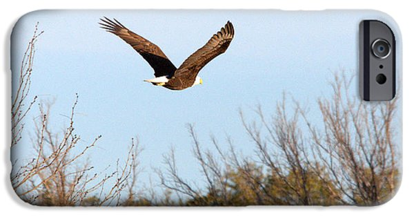 Flight iPhone Cases - Bald Eagle In Flight iPhone Case by Roy Williams