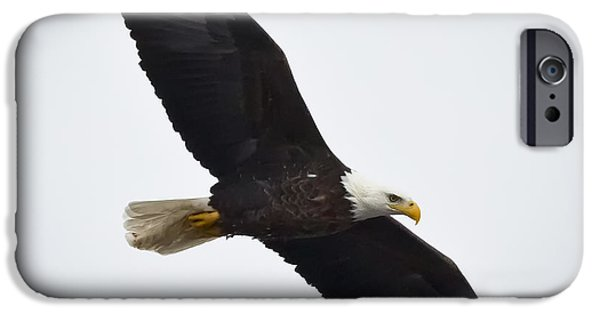 Flight iPhone Cases - Bald Eagle iPhone Case by Ricky L Jones