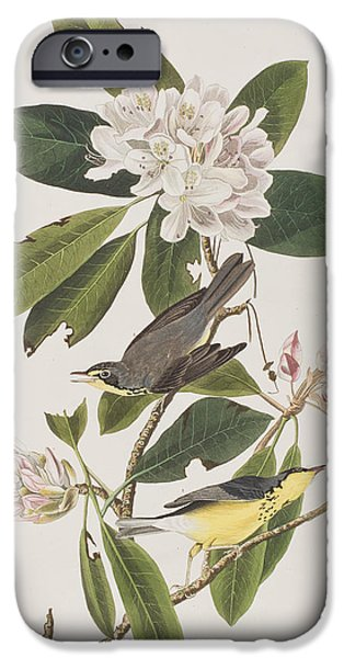 Flora Drawings iPhone Cases - Canada Warbler iPhone Case by John James Audubon