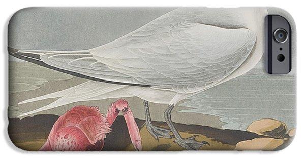 Tern iPhone Cases - Cayenne Tern iPhone Case by John James Audubon