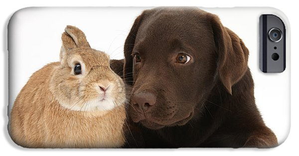 Best Sellers -  - Chocolate Lab iPhone Cases - Chocolate Lab & Netherland-cross Rabbit iPhone Case by Mark Taylor
