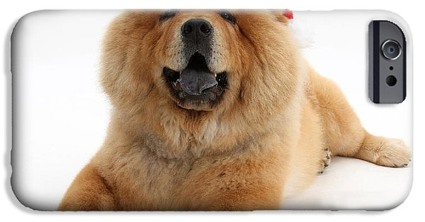 House Pet iPhone Cases - Christmas Dog iPhone Case by Mark Taylor
