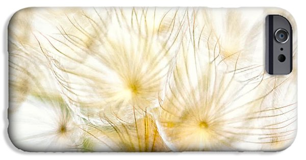 Close Up Floral iPhone Cases - Dandelion iPhone Case by Stylianos Kleanthous