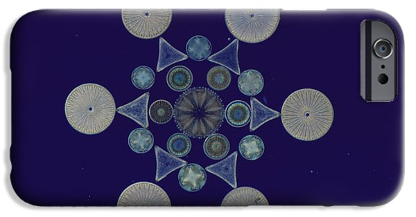 Diatoms Photographs iPhone Cases - Diatom Arrangement iPhone Case by M. I. Walker