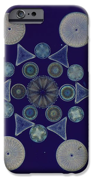 Diatom Arrangement iPhone Case by M. I. Walker