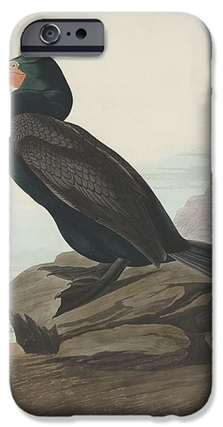 Beach iPhone Cases - Double-Crested Cormorant iPhone Case by John James Audubon