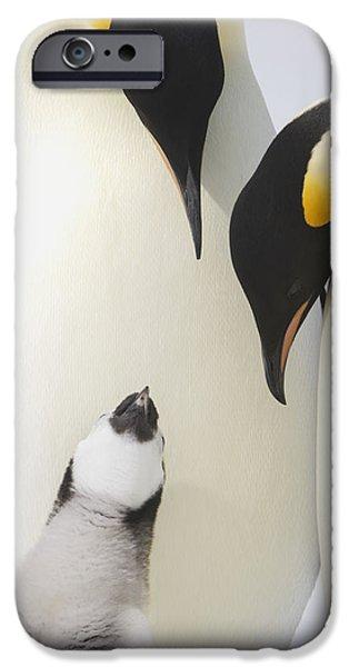 Bonding iPhone Cases - Emperor Penguin  Aptenodytes Forsteri iPhone Case by Daisy Gilardini