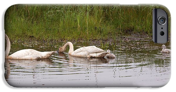 Swans... iPhone Cases - Family iPhone Case by Linda Kerkau