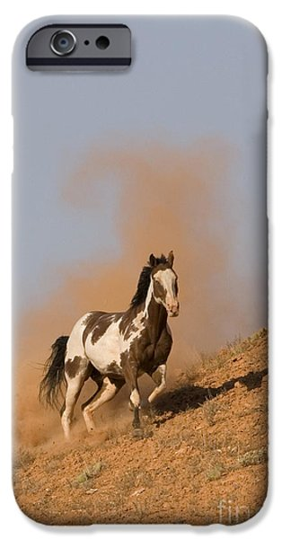 Overo iPhone Cases - Galloping Pinto Horse iPhone Case by Jean-Louis Klein & Marie-Luce Hubert