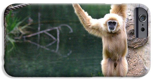 Bonding iPhone Cases - Gibbon Swinging iPhone Case by Roy Williams