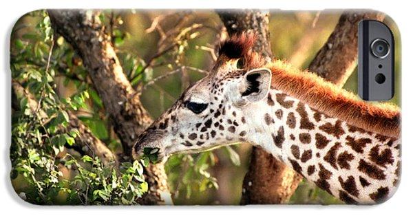 Green Photographs iPhone Cases - Giraffe iPhone Case by Sebastian Musial