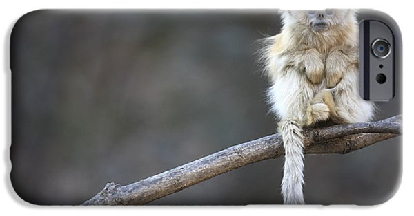 Color Image iPhone Cases - Golden Snub-nosed Monkey Rhinopithecus iPhone Case by Cyril Ruoso