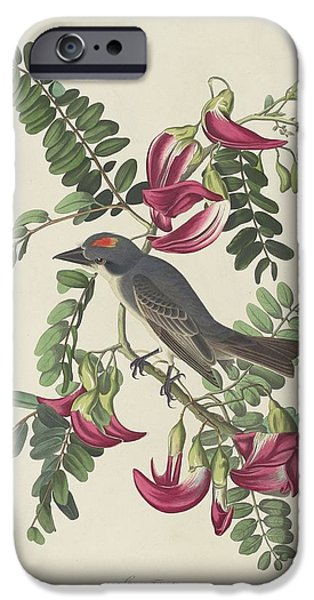 Audubon iPhone Cases - Gray Tyrant iPhone Case by John James Audubon